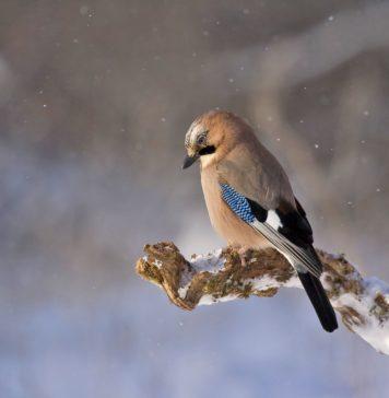 Burung di Udara akan Menyampaikan Ucapanmu
