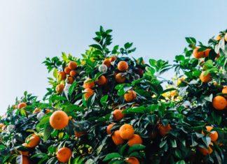 buah tidak pernah bohong